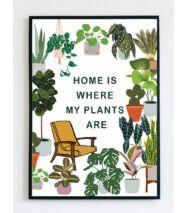 Illusztráció - Otthon és növény